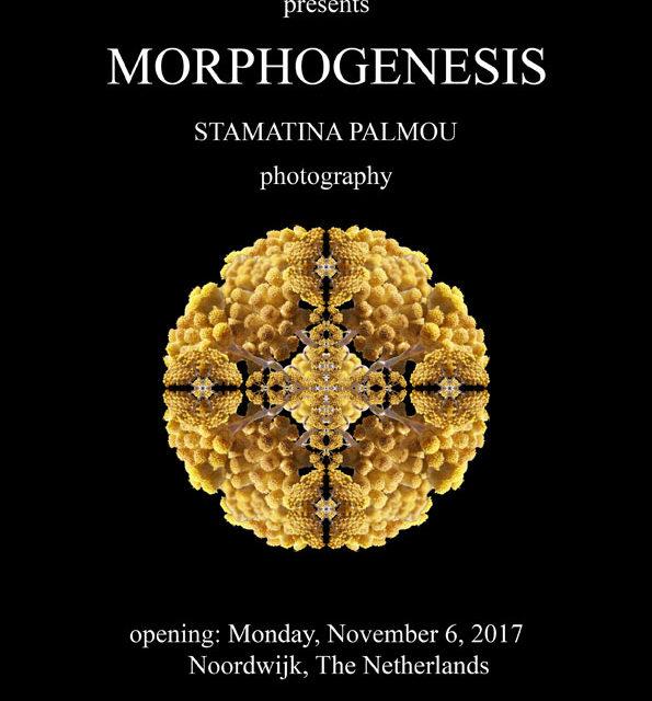 Morphogenesis at the European Space Agency