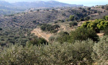 Greek Extra Virgin Olive Oils Win Awards in Los Angeles