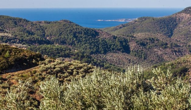 Greek Olive Oils Win 42 Awards at TerraOlivo Competition